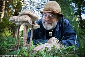 admin, Author at Mushroom Prints